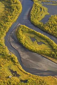 Aerial view of Birch trees (Betula sp) growing in the Laitaure delta, Sarek National Park, Laponia World Heritage Site, Lapland, Sweden, September 2008  -  Wild Wonders of Europe / Cairns