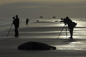 Photographers and Grey seals (Halichoerus grypus) on beach, Donna Nook, Lincolnshire, UK, November 2008 - Wild Wonders of Europe / Geslin