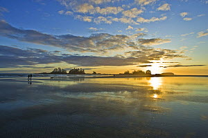 Chestermans Beach at dawn, with Frank Island in the distance, Clayoquot Sound, Vancouver Island, British Columbia, Canada  -  Matthew Maran