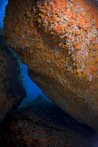 Rock covered in Yellow encrusting anemones (Parazoanthus axinellae) and sponges, 'Frank's Paradise', Lavezzi Islands, Corsica, France, September 2008  -  Wild Wonders of Europe / Pitkin