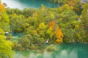 View on Lower Lakes in autumn, Plitvice Lakes NP, Croatia, October 2008  -  Wild Wonders of Europe / Biancarelli