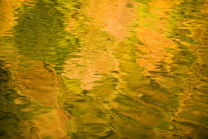 Tree colours reflected on the Galovac water surface, Upper Lakes, Plitvice Lakes NP, Croatia, October 2008  -  Wild Wonders of Europe / Biancarelli