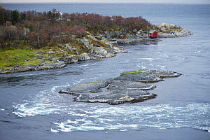 The current running out to sea, Saltstraumen, Bod�, Norway, October 2008  -  Wild Wonders of Europe / Lundgren