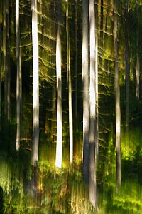Abstract impression of forest with reflection in Krinice River, Kyov, Ceske Svycarsko / Bohemian Switzerland National Park, Czech Republic, September 2008 - Wild Wonders of Europe / Ruiz