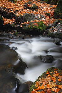 Fallen leaves on rocks on the Krinice River banks, Kyov, Ceske Svycarsko / Bohemian Switzerland National Park, Czech Republic, November 2008  -  Wild Wonders of Europe / Ruiz