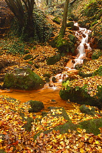Sucha Kamenice / Creek in forest covered in fallen leaves, Hrensko, Ceske Svycarsko / Bohemian Switzerland National Park, Czech Republic, November 2008  -  Wild Wonders of Europe / Ruiz
