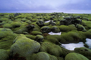 Moss covered rocks in lava field, central Iceland 2005  -  Jouan & Rius