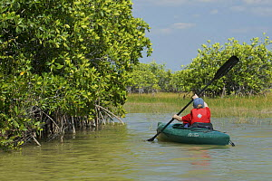 Russell Laman paddling through mangroves on the Nine Mile Pond Canoe Trail, Everglades National Park, Florida, USA. Model released. April 2008  -  Tim Laman