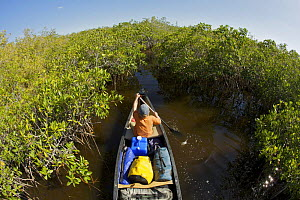 Russell Laman paddling a canoe through mangrove channels of the Hell's Bay Canoe Trail, Everglades National Park, Florida, USA. Model released, April 2008  -  Tim Laman