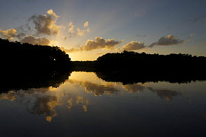 Sunrise in the Caroni Swamp. Caroni Bird Sanctuary, Trinidad, Trinidad and Tobago. February 2006  -  Tim Laman