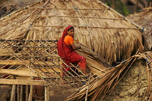 Woman thatching a roof in the village of Chandpai on the Passur River, where shrimp fry fishing to supply shrimp for the shrimp ponds is the main industry. Villagers live in simple mud and thatch huts... - Tim Laman
