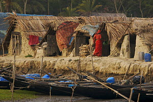 Traditional houses in the village of Chandpai on the Passur River, where shrimp fry fishing to supply shrimp for the shrimp ponds is the main industry. Villagers live in simple mud and thatch huts tha... - Tim Laman