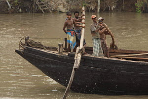 Men operating the oars to power a cargo boat on the Rupsha River, Sundarbans, Khulna, Bangladesh, April 2006 - Tim Laman