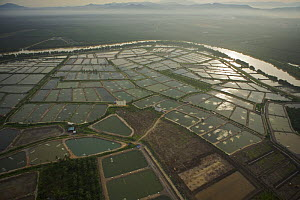 Aerial view of shrimp ponds and river on mainland part of Pulau Pinang province, Malaysia. May 2006 - Tim Laman
