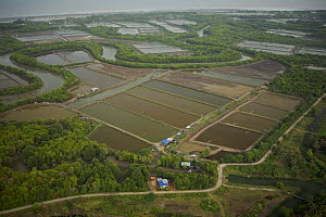 Aerial view of mangroves, rivers and shrimp ponds in the Sungai Petani area, Malaysia. May 2006 - Tim Laman