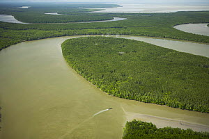 Aerial view of Matang mangrove forest, site of 100 year old managed mangrove harvesting program for charcoal production on a 30 year rotation. Taiping vicinity, Perak, Malaysia. May 2006 - Tim Laman