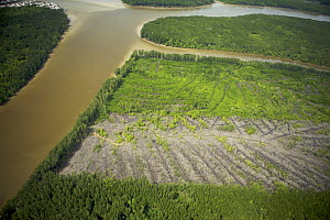 Aerial view of Matang mangrove forest, site of 100 year old managed mangrove harvesting program for charcoal production on a 30 year rotation. Recent clearcut areas visible. Taiping vicinity, Perak, M... - Tim Laman