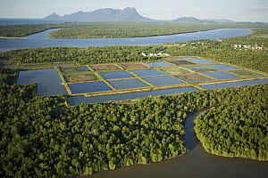 Aerial view of mangrove forest and shrimp ponds  in the Sarawak Mangrove Reserve area, Sarawak, Borneo, Malaysia. June 2006. Several shrimp ponds have been abandoned. - Tim Laman