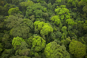 Aerial view of rainforest canopy on southern coastal area of Bioko Island, Equatorial Guinea, Central Africa. January 2008  -  Tim Laman