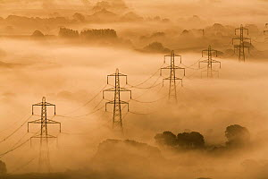Electricity pylons rising through mist at dawn, view of The Marshwood Vale from Lambert's Castle, Dorset, England, September 2008  -  Guy Edwardes