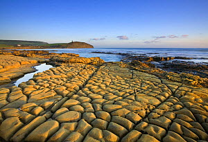 Rocks exposed at low tide on Broad Bench, Kimmeridge Bay, Isle of Purbeck, Jurassic Coast World Heritage Site, Dorset, England, October 2008 - Guy Edwardes