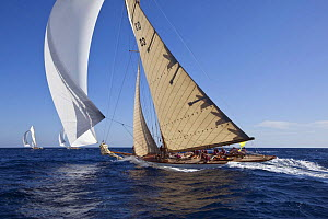 "15M Fife cutter ""Tuiga"" sailing at her centenary, Monaco Classics Week, September 2009. - Benoit Stichelbaut"