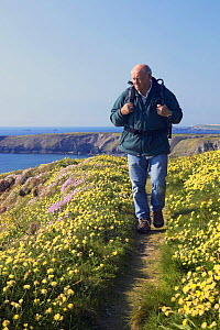 Man hiking along on clifftop footpath (The South West Coastal Path) in spring, Bedruthan Steps, Cornwall, England, May 2005, model released - Guy Edwardes