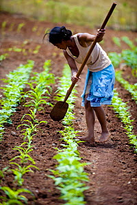 Young woman cultivating crops at home for homeless women and orphans, Tananarive, Madagascar, October 2006  -  Inaki Relanzon