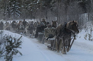 People travelling by horse and sleigh to Roros market. Started in 1854, exhibitors and vendors come from a long way off, -35 degrees centigrade, Dovrefjell National Park, Norway, February 2009  -  Wild Wonders of Europe / Munier