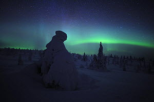 Northern lights over snow covered forest, Riisitunturi National Park, Finland, February 2009  -  Wild Wonders of Europe / Zacek