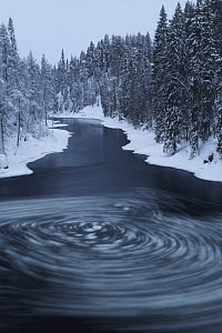 Whirlpool with pieces of ice in water, Kitkajoki River, Kuusamo, Oulanka National Park, Finland, February 2009  -  Wild Wonders of Europe / Zacek