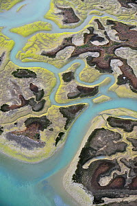 Aerial view of marshes with Seaweed exposed at low tide, Bah�a de C�diz Natural Park, C�diz, Andalusia, Spain, March 2008 - Wild Wonders of Europe / López