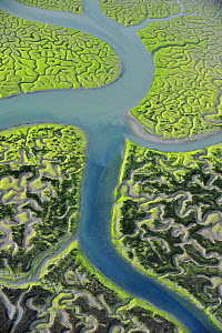 Aerial view of marshes with Seaweed exposed at low tide, Bah�a de C�diz Natural Park, C�diz, Andalusia, Spain, March 2008 WWE BOOK PLATE. Wild Wonders kids book. - Wild Wonders of Europe / López