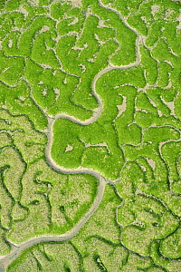 Aerial view of marshes with Seaweed exposed at low tide, Bah�a de C�diz Natural Park, C�diz, Andalusia, Spain, February 2009 - Wild Wonders of Europe / López