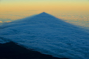 Shadow of the Teide volcano in sea of clouds at sunset, Teide National Park, Tenerife, Canary Islands, Spain, December 2008  -  Wild Wonders of Europe / Relanzón