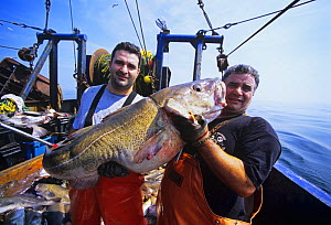 Father and son dragger hold giant 45 pound Codfish (Gadus morhua) aboard dragger / trawler. Gloucester, Massachusetts, USA, North Atlantic Ocean. 2007 Model released. - Jeff Rotman