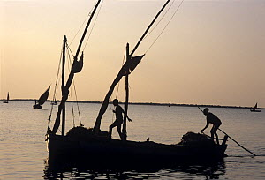 Fishermen return from night of gill netting onboard a dhow, Vilankulo, Mozambique, November 2008  -  Jeff Rotman