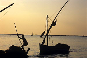 Fishermen return from night of gill netting onboard dhows, Vilankulo, Mozambique, November 2008  -  Jeff Rotman