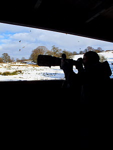 Photographer, Juan Carlos Munoz, taking photographs of Red Kites (Milvus Milvus) from hide at feeding site, Gigrin Farm, Powys, Rhayader, Wales, UK, February 2009  -  Wild Wonders of Europe / Muñoz