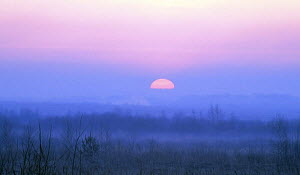 Sun rising over the Craneland reserve, Moscow Oblast, Russia, May  -  Konstantin Mikhailov