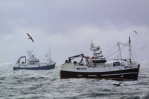 "Banff registered pair trawlers ""Beryl"" and ""Onward"" fishing for Haddock on the North Sea, July 2009. - Philip Stephen"