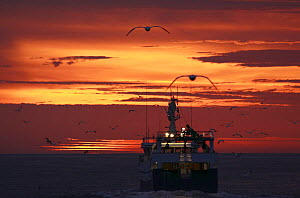 North Sea trawler heading west at dusk, followed by seabirds, September 2009. Property released.  -  Philip Stephen
