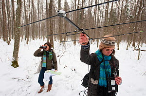 Researchers collecting data on bison, Bialowieza NP, Poland, February 2009  -  Wild Wonders of Europe / Unterthiner