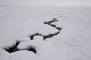 Small stream flowing through snow covered landscape, Forollhogna National Park, Norway, September 2008  -  Wild Wonders of Europe / Munier