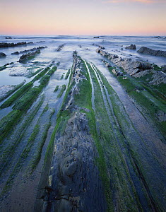 Rock formations on Barrika beach at low tide, Bilbao, Basque country, Spain, October 2008  -  Wild Wonders of Europe / Popp-Ha