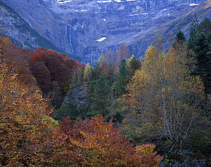Forest in the Cirque de Gavarnie, Pyrenees, France, October 2008  -  Wild Wonders of Europe / Popp-Ha