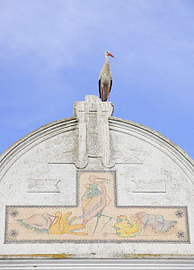 White stork (Ciconia ciconia) on top of town house with paintings of storks on it, Los Barruecos de Caceres, Extremadura, Spain, April 2009 - Wild Wonders of Europe / Widstrand
