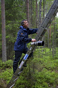Photographer Peter Cairns climbing ladder to photograph Great grey owl (Strix nebulosa) in boreal forest, Northern Oulu, Finland, June 2008  -  Wild Wonders of Europe / Cairns