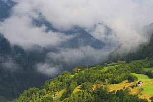 Low clouds over meadows surrounded by trees, with small farm buildings near Fliess, Naturpark Kaunergrat, Tirol, Austria, July 2008  -  Wild Wonders of Europe / Benvie