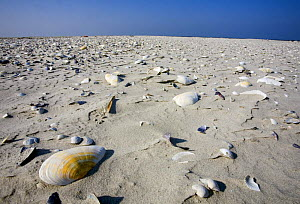 Sand and shells, Japsand, Schleswig-Holstein Wadden Sea National Park, Germany, April 2009  -  Wild Wonders of Europe / Novák